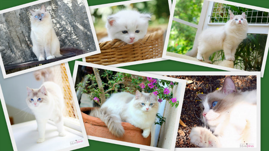exemplos-fotografias1